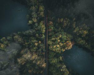 Beyond The Tree Line